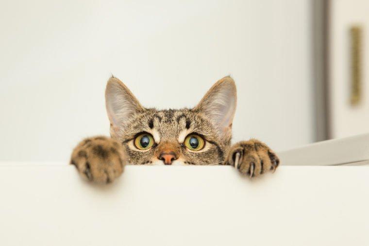چرا گربهها از خیار میترسند؟