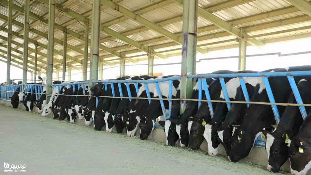 عرضه اولیه ای با طعم شیر در راه است