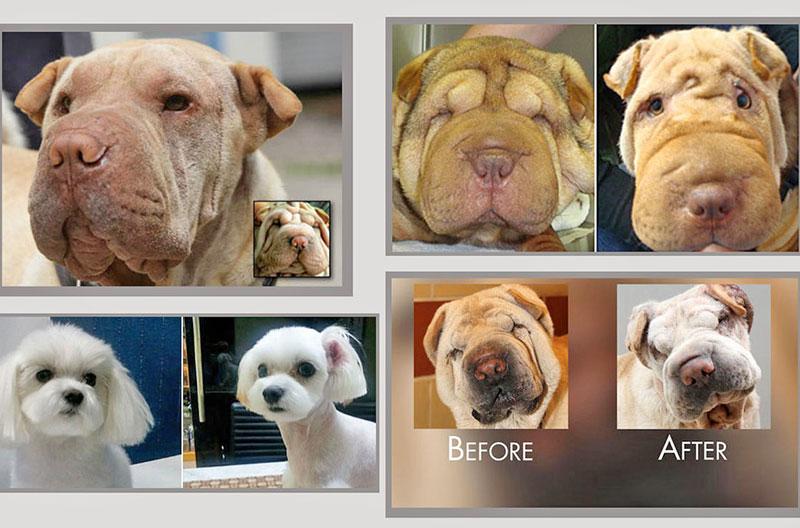 جراحی زیبایی، شکنجهای برای حیوانات