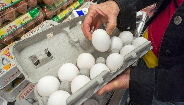 تعادل بازار تخممرغ تا ۳ روز آینده