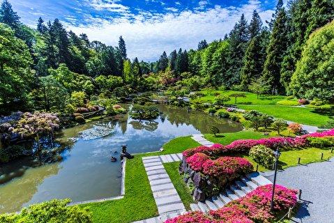 باغ ژاپنی سیاتل از نمای نزدیک