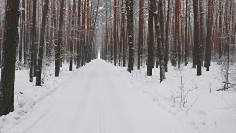 جنگل اوکراین در فصل زمستان