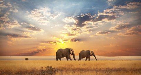 حیات وحش آفریقا در قاب 4K