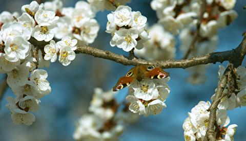 رویش گلها  و درختان در فصل بهار