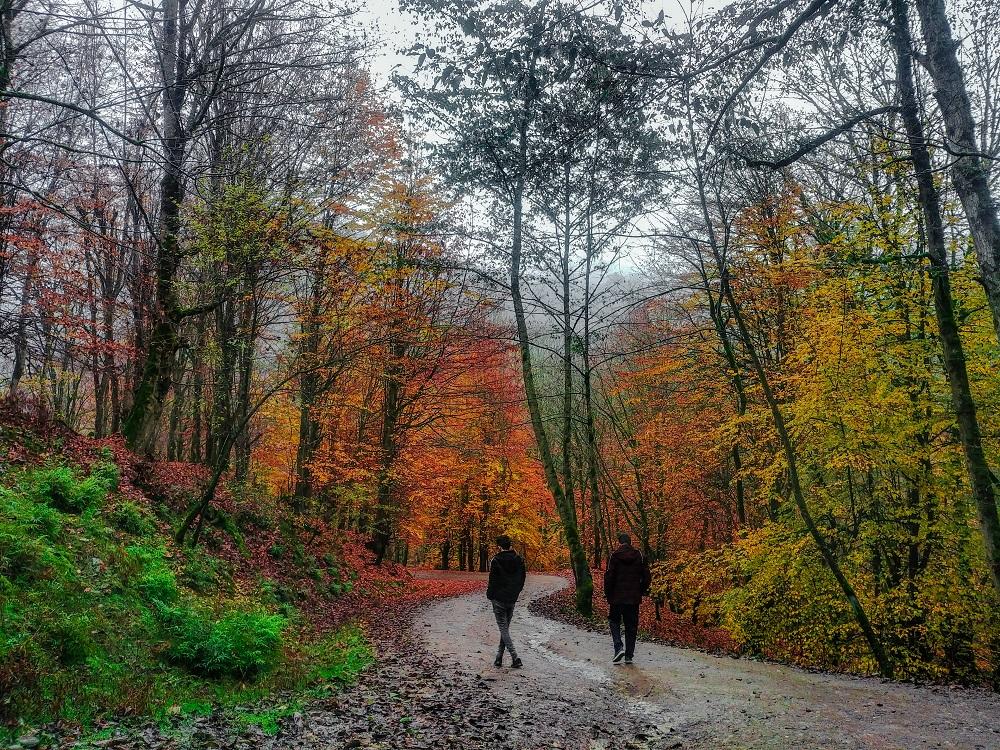 تصویر رویایی پاییزی از طبیعت زیبای مازندران
