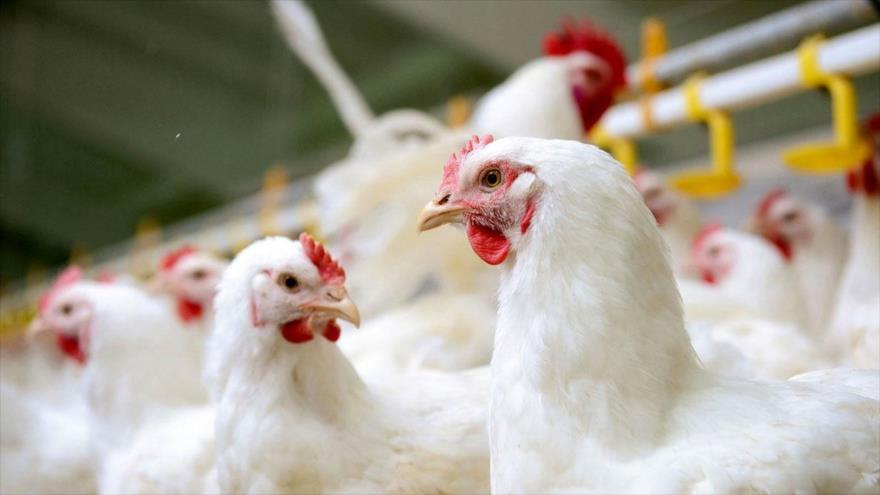 نایب رئیس کانون انجمن صنفی مرغداران