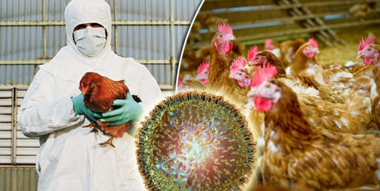 شیوع آنفلوانزای مرغی H۵N۶ در چین