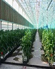 بزرگترین گلخانه شیشه ای خاورمیانه