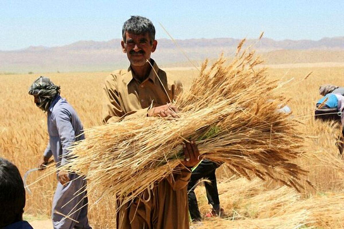 جایزه هزار تومانی برای گندمکاران؛ حمایت، صدقه یا منت بر سر کشاورز؟!