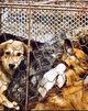 بالاخره «لایحه حمایت از حیوانات» تصویب شد / با این مجازات ها مشکل رفع خواهد شد؟