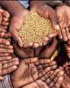 امنیت غذایی در قوانین و اسناد بالادستی تا چه میزان مورد توجه قرار گرفته اند؟