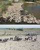 مدیرکل محیط زیست: خشک شدن هورالعظیم «طبیعی» است!/ رضایی: نهادهای انقلابی به کمک بشتابند