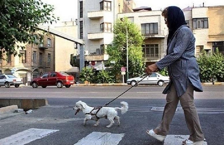 از منظر قانون سگ گردانی جرم است یا سگ آزاری؟