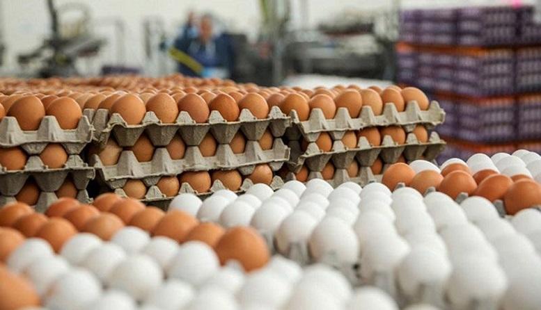 افزایش ١۶ برابری قیمت شانه کاغذی تخم مرغ