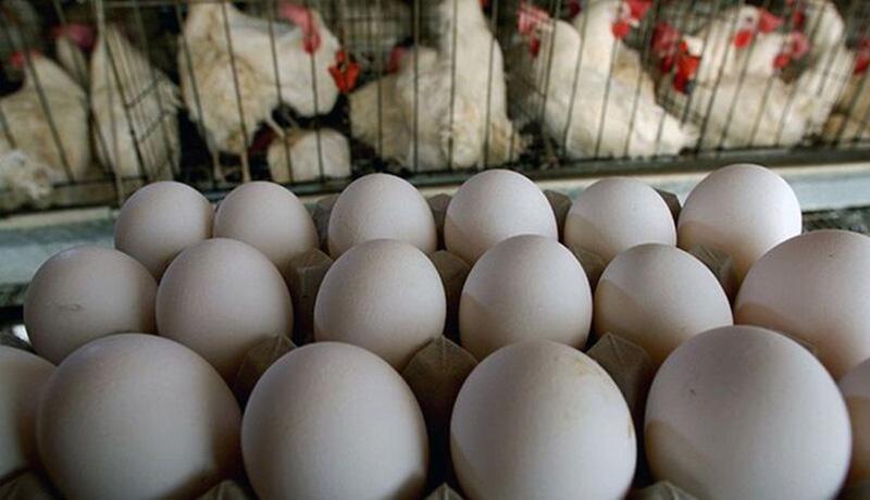تخم مرغ رسما گران شد
