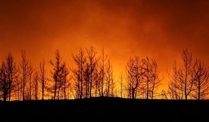 آتش جنگلهای حومه شهر