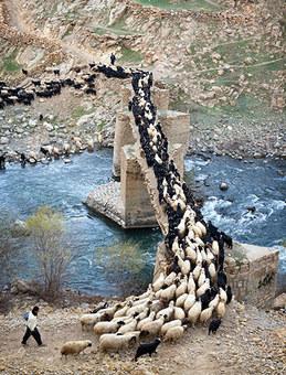 چوپان های دره تنگیور در کردستان، روستای پالنگان افزون بر ۲۰ چشمه جوشان در دره تنگیور دارد که آب خود را به رودخانه تنگیور میریزند و آبشارهای حاصل از ریزش آب این چشمهها بسیار دیدنی است. Amos Chapple