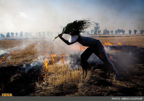 به آتش کشیدن مزارع پس از برداشت محصول – ایلام