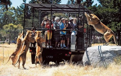 پارک حیات وحش اورانا، نیوزلند