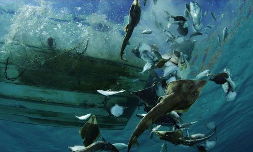 شکارهای خوشاقبال سوسماهیها (گیتارماهی)، سفرهماهیها و دیگر آبزیانی که میان تورهای صید میگو گرفتار شدهاند و ماهیگیران علاقهای به خوردن آنها ندارند، توسط سرنشینان یک قایق ماهیگیری به آبهای مکزیک برگردانده میشوند.