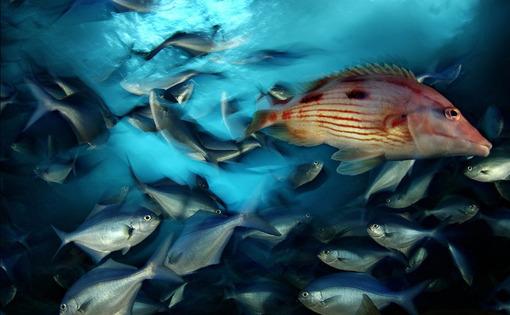 یک ماهی متفاوت