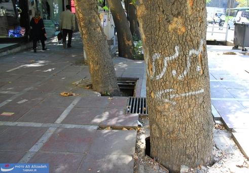 استفاده از تنه درخت بجای تابلو راهنما!
