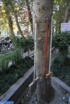 استفده خلاقانه کاسبین خیابان ولیعصر از تنه درخت!