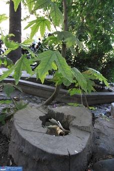 استفاده از کنده درخت برای ریختن زباله و ته سیگار!