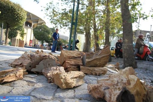 برچیدن بقایای بجای مانده از کنده درخت و احتمالاً آجر چینی بر روی آن در روزهای آینده