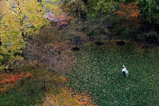 مرد با صندلی در دست در حال گذر از پارکی پوشیده از برگهای زیبا و رنگارنگ درختان پارکی در نیویورک  REUTERS/John Schults