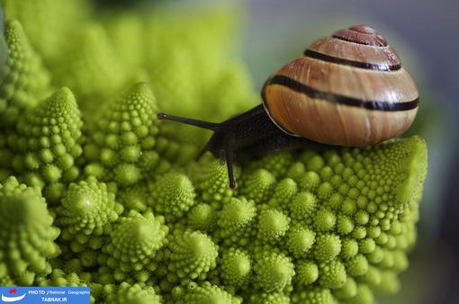 مارپیچ: آمستردام؛ هلند؛ عکاس: Harjen Woltjer شرح عکس: وقتی زندگی گل را بررسی کنید؛ خواهید دید که تمام زندگی بصورت مارپیچی ساخته شده است.