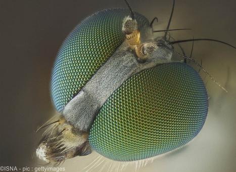 تصویری از یک مگس لنگدراز از لوری نایت