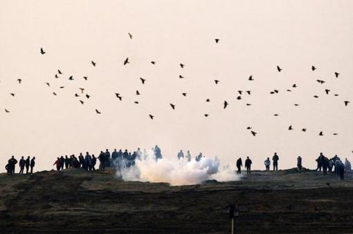 فلسطینیان معترض به شهرک سازی اسرائیلی ها در نوار غزه در میان گازهای اشک آور-REUTERS/Amir Cohen