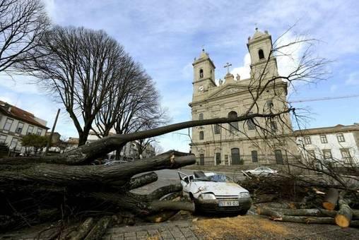 وزش طوفان شدید در پورتو موجب شکستگی و قطع درختان شد-ANSA