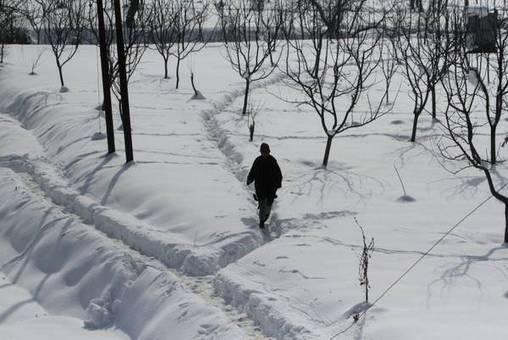 منطقه کشمیر مملو از برف شده/ANSA