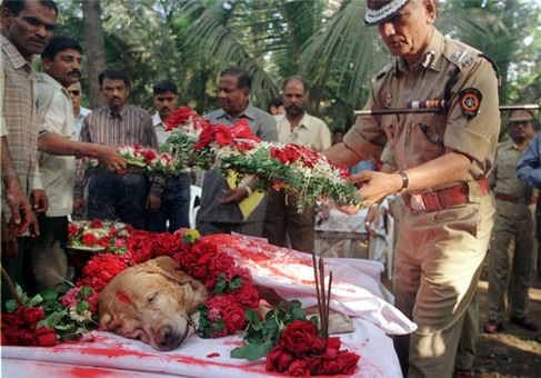 تشییع جنازه باشکوه سگی که جان هزاران نفر را در سال 1993 نجات داد، بمبئی ـ هند