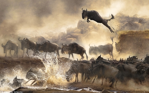 ارسال از هنگ کنگ - پارک ملی کنیا و حرکت گاوهای وحشی