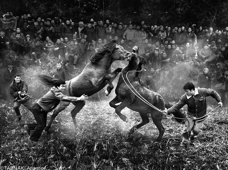 ارسال از چین - جنگ اسبها