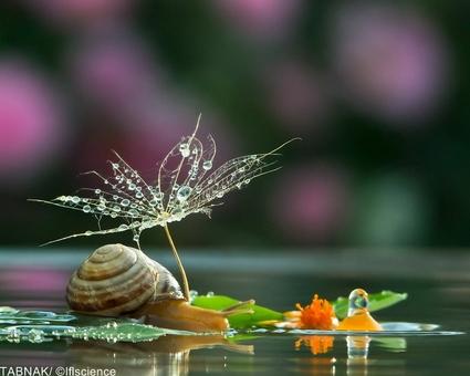لحظات خارق العاده زندگی حلزون