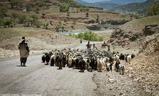 تصاویر/ کوچ عشایر بختیاری