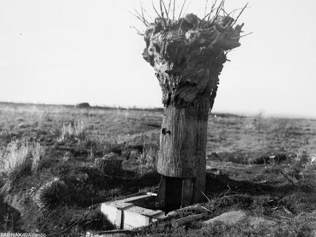 درخت متحرک ساخته شده توسط ارتش بریتانیا  برای انجام دیده بانی و رصد مواضع دشمن