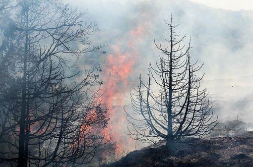 ادامه آتش سوزی گسترده جنگل های گلستان./ISNA