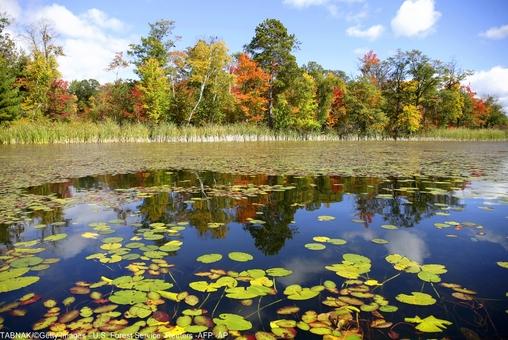 انعکاس جلوه زیبای پاییز در دریاچه راک مینه سوتا آمریکا