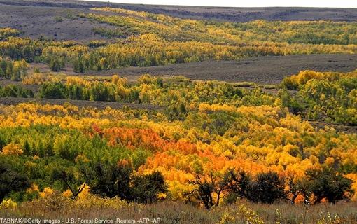 جنگلهای زیبای پاییزی در جنوب شرقی ایالت اورگان آمریکا