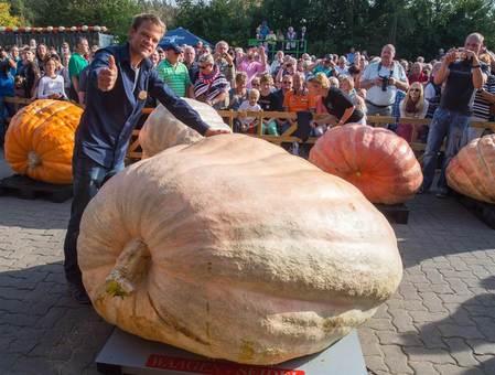 یک کشاورز سوئیسی توانست با پرورش و نمایش یک کدو تنبل ۹۵۰ کیلوگرمی در ماینز - آلمان ، رکورد بزرگ و سنگینترین کدو تنبل را در این مسابقه شکسته و رکوردی را به نام خود به ثبت برساند. /epa