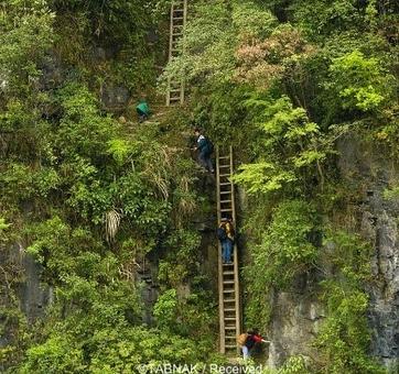 دانش آموزان منطقه «ژانگ جیوان» در جنوب چین برای مدرسه رفتن باید از این نردبان چوبی و خطرناک بالا بروند که احتمال هر خطری برایشان وجود دارد.