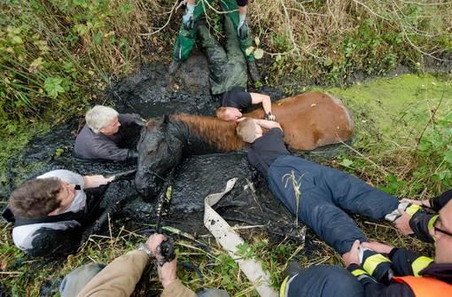 عملیات نجات یک اسب چهارساله گرفتار در باتلاق توسط آتش نشانها و نیروهای امدادی  در هامبورگ آلمان./epa