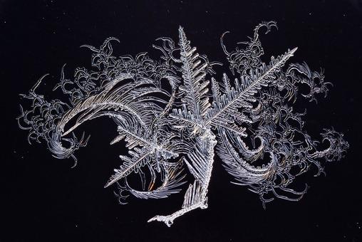 برنده لوح تقدیر بخش طبیعت. اژدهای یخی در جشنواره یخ استونی. عکاس: Maie Kirnmann