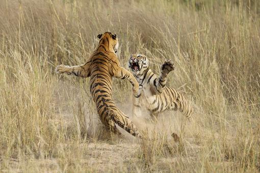برنده لوح تقدیر بخش طبیعت. عنوان عکس: قدرت بازوان. عکاس: Archna Singh