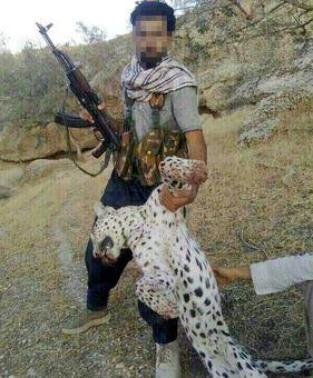 عکس شکار پلنگ ایرانی شکار پلنگ شبکه های اجتماعی